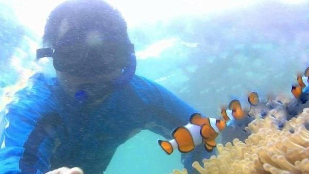 Bermain Dengan Ikan Badut di Pulau Tikus