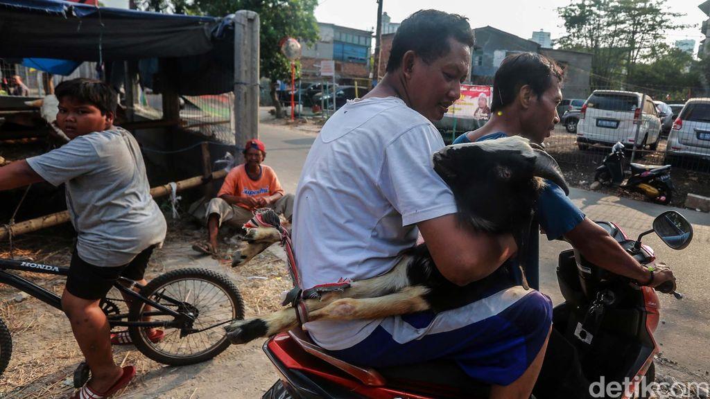 Tidak hanya dengan mobil, pengiriman kambing kurban juga dilakukan dengan motor dan bajaj. Yuk lihat.