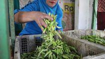 Harga Cabai Rawit Tembus Rp 100 Ribu/Kg, Penjualan di Jombang Turun