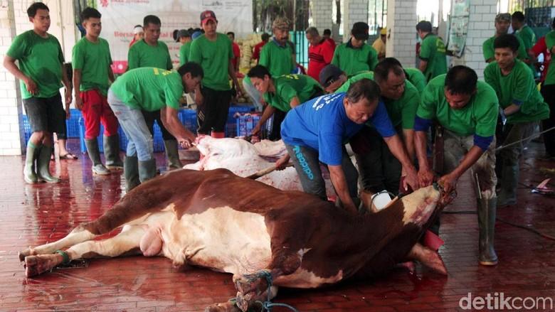 Melihat Pemotongan Hewan Kurban di Masjid Istiqlal