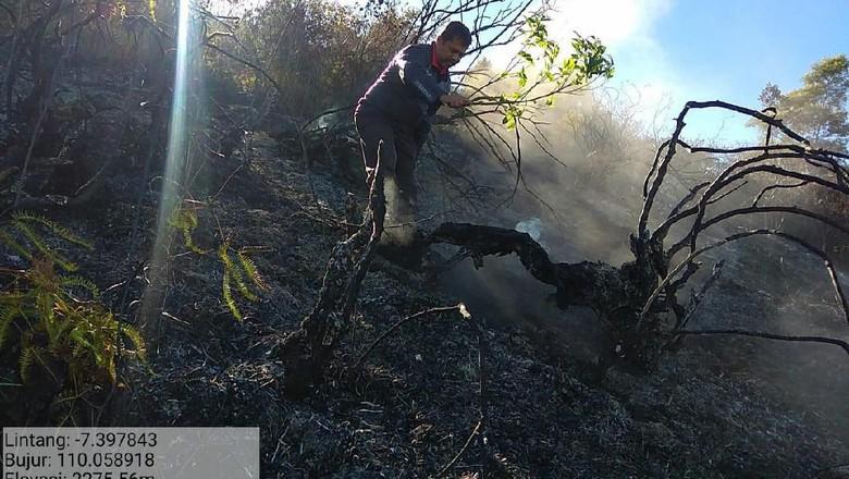 Hutan di Lereng Gunung Sumbing Wonosobo Terbakar