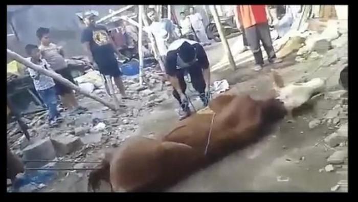 Asep tersungkur saat hendak menyembelih sapi kurban. (Foto: tangkapan layar video viral)