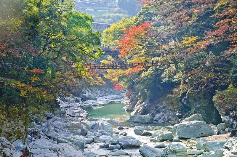 Iya Valley adalah sebuah lembah cantik yang dibuka sebagai tempat wisata di Prefektur Tokushima, Miyoshi. Lembah ini punya pemandangan indah dan hijau yang bisa menyegarkan pikiran. (iStock)