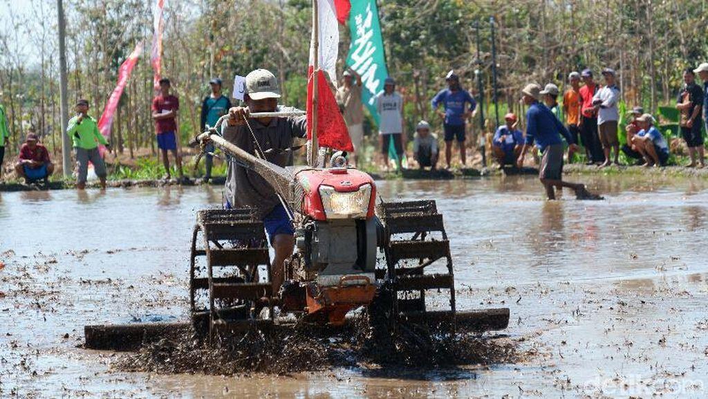 Unik! Petani di Banyuwangi Gelar Lomba Balap Traktor Peringati HUT RI