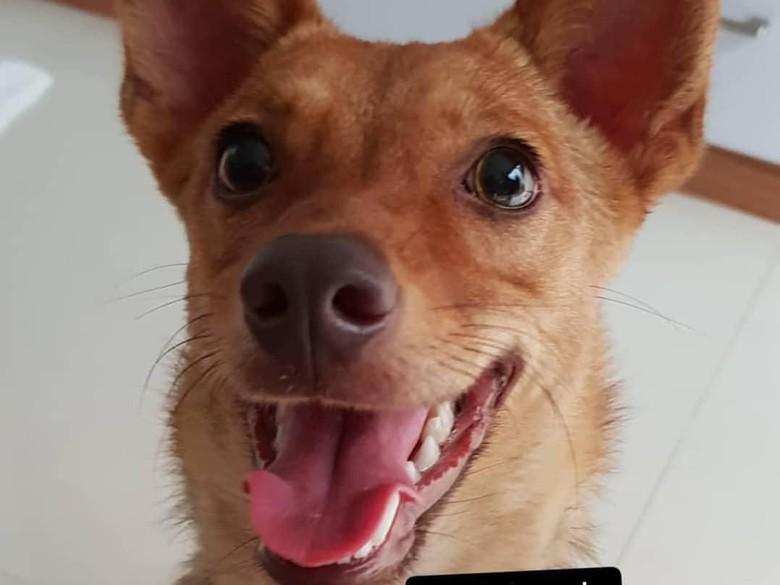 Pelaku Penembakan Anjing Beedo Ditetapkan Sebagai Tersangka