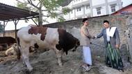 Cara Pemkot Tangerang Agar Daging Kurban Layak Dikonsumsi