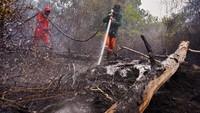 Sejumlah personel pemadam kebakaran harus terjun langsung ke titik api di kawasan Taman Nasional Tesso Nilo, Kabupaten Pelalawan, Provinsi Riau. Antara Foto/FB Anggoro.