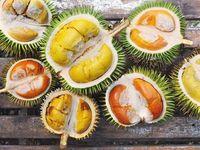 Seniman Ini Buat Infografis Lucu Berisi Jenis dan Rasa Durian Populer