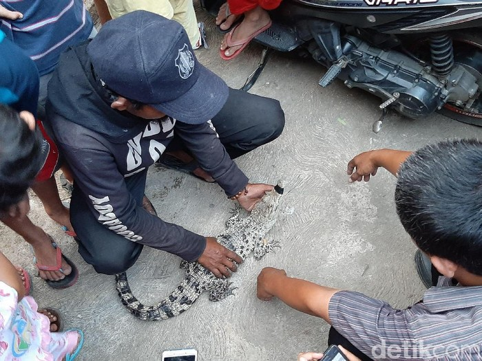 Warga Bogor menyerahkan buaya peliharaan ke BSKDA. (Farhan/detikcom)