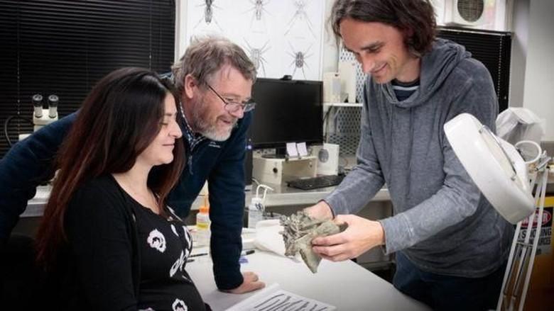 Fosil Penguin Raksasa Ditemukan di Selandia Baru