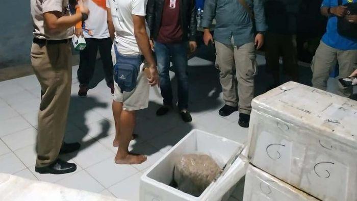 Penyelundupan Benih Lobster Digagalkan. Foto: KKP