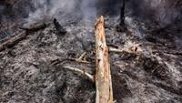 Kebakaran juga melanda kawasan Taman Nasional Tesso Nilo (TNTN), Pelalawan, Riau. Kawasan yang terbakar di Tesso Nilo berada di zona rehabilitasi. Area ini merupakan eks hak penguasaan hutan (HPH) yang masuk dalam perluasan TNTN. Antara Foto/FB Anggoro.