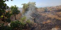 Petugas TN Tambora Padamkan Api Kebakaran Lahan di Bima NTB