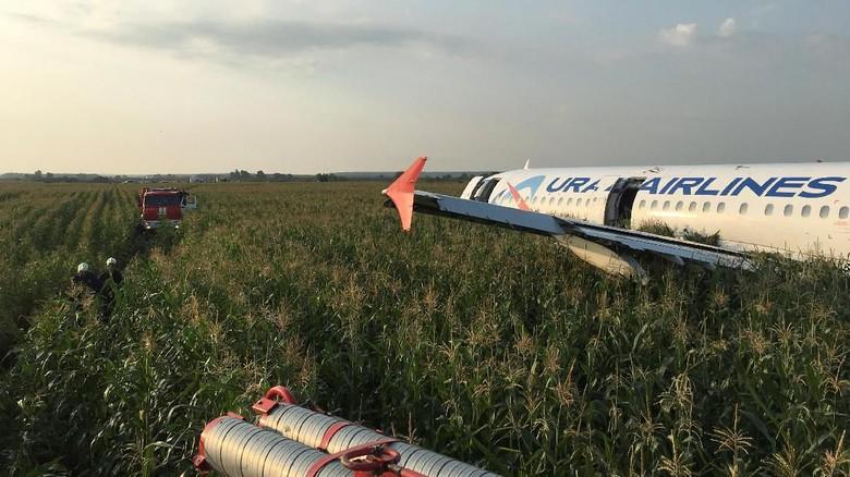 Pilot Maskapai Rusia yang Mendarat Darurat di Ladang Jagung Dipuji Pahlawan