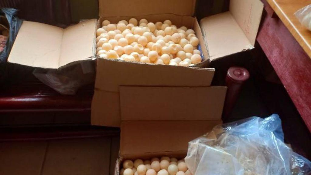 Polisi Sita Seribuan Telur Penyu di Sambas Kalbar
