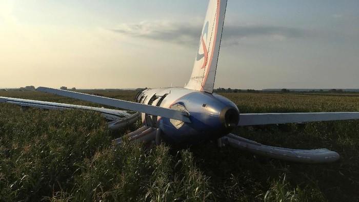 pesawat Airbus A321 milik maskapai Ural Airlines mendarat darurat di ladang jagung (Foto: REUTERS/Stringer)