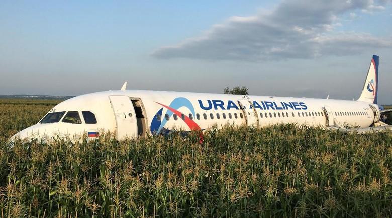 Tabrak Burung, Pesawat Maskapai Rusia Mendarat Darurat di Ladang Jagung