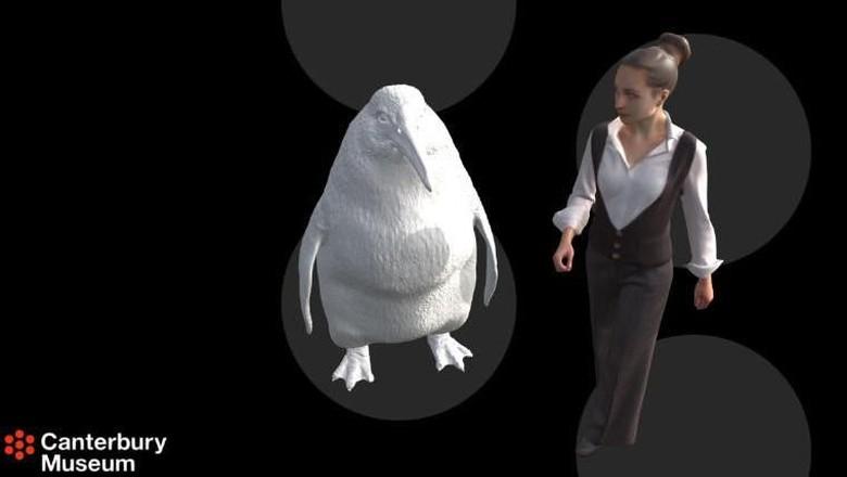 Ilustrasi penguin raksasa (dok Canterbury Museum)