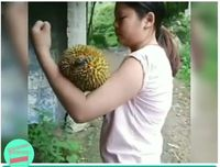 Ngilu! Begini Aksi Wanita Super Kupas Durian dengan Otot Lengannya