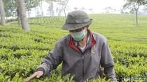 Tangkuban Perahu Masih Erupsi, Wisata Tea Walk Sukawana Sepi