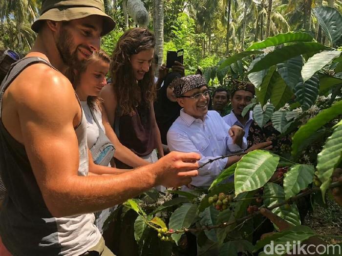 Bupati Anas ikut festival panen kopi (Foto: Ardian Fanani)