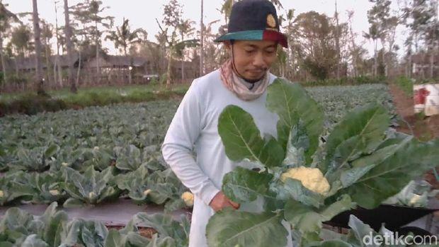 Petani Blitar racik pestisida organik/