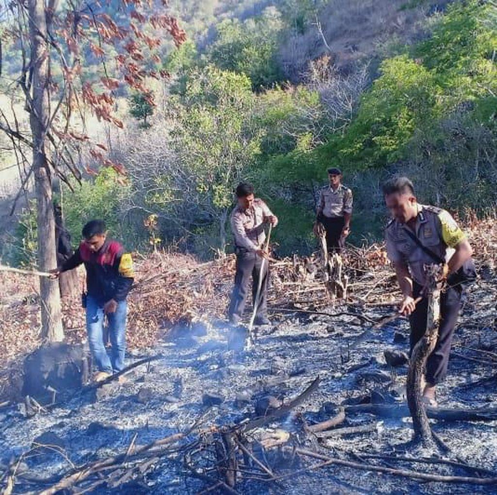 1,5 Hektare Lahan di Bima NTB Terbakar, Seorang Warga Ditangkap Polisi