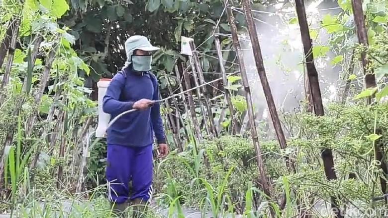 Wow, Petani Blitar Racik Pestisida Organik Ekonomis dan Ramah Lingkungan