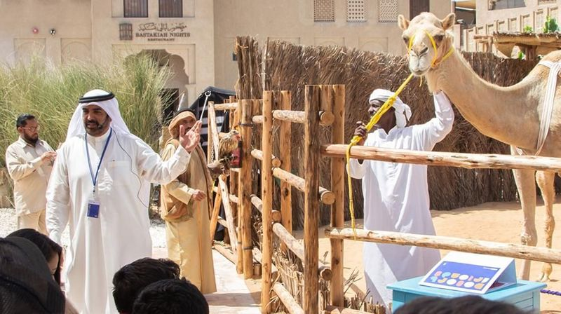 SMCCU memiliki program Camel in the City. Ini adalah tur menikmati kota tua Al Fahidi Historical Neighbourhood. Kita bisa mengetahui banyak cerita soal unta dan apa sejarah dan hubungannya dengan Dubai. (Visit Dubai)