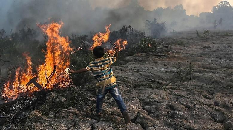 Tertimpa Pohon Saat Padamkan Api di Tahura Senami, Anggota Manggala Agni Tewas