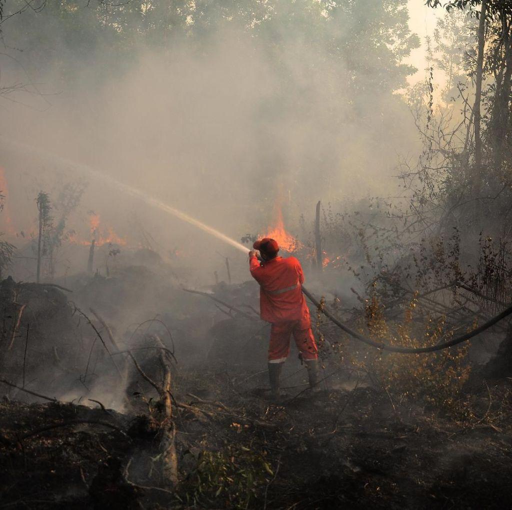 Petugas Hingga Anak-anak Berjibaku Padamkan Karhutla di Palembang