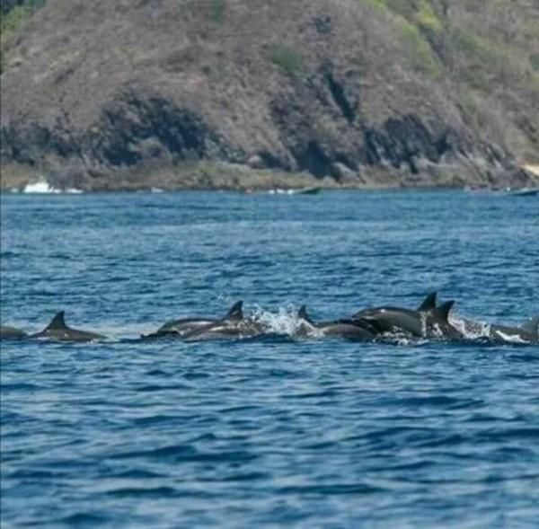 Pantai Wane ini berlokasi di Desa Tolotangga, Kecamatan Monta. Untuk bisa melihat lumba-lumba, hanya butuh waktu setengah jam naik kapal. (dok. Pokdarwis La-Bibano Wane)