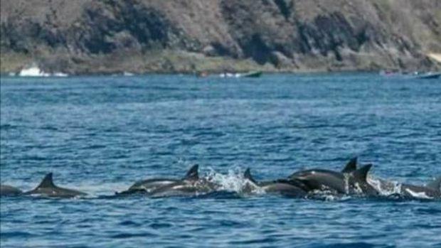 Pantai Wane buat lihat lumba-lumba di Bima, NTB