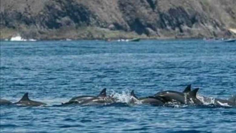 Wisata melihat lumba-lumba di Pantai Wane, NTB (Pokdarwis La-Bibano Wane)
