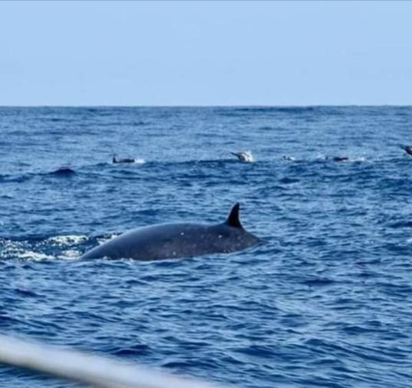 Selama melihat lumba-lumba, traveler akan ditemani tour guide untuk memandu. Ada tim penyelamat juga untuk antisipasi ketika terjadi sesuatu dalam perjalanan. (dok. Pokdarwis La-Bibano Wane)