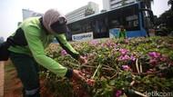 Tanaman Bugenvil Jadi Solusi Pemprov DKI Atasi Polusi Udara