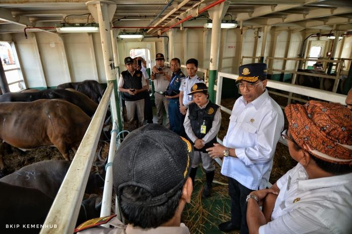 Menhub mengungkapkan, sampai saat ini volume muatan ternak sudah mencapai 46.000 ton dan ditargetkan untuk tahun ini mencapai 70.000 ton. Istimewa/Kementerian Perhubungan.