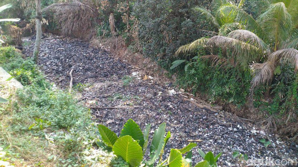 Pulau Sampah Bak Reklamasi di Kalibaru Bogor Belum Dibersihkan