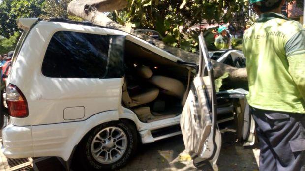 Mobil Isuzu Panther tertimpa pohon tumbang
