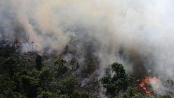 Kebakaran Terburuk Hutan Amazon Picu Keprihatinan di Media Sosial