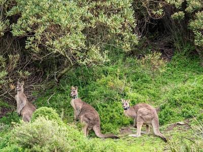 Road Trip Keliling Australia