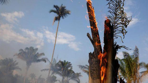 Kebakaran Hutan Amazon /