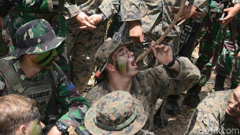 Latihan di Hutan Banyuwangi, Marinir AS Terheran-heran Khasiat Kayu Bajakah