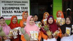 Warga Korban Kebakaran Lahan Gambut di Riau Bangkit dengan Tanam Nanas