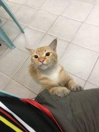 Beri Makan Kucing Kelaparan, Pria Ini Ditraktir Makan Orang Tak Dikenal