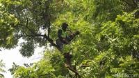Petugas Dinas Pertamanan DKI Jakarta memangkas pohon yang rimbun di Jalan Sutan Syahrir, Jakarta, Kamis (23/8/2019).