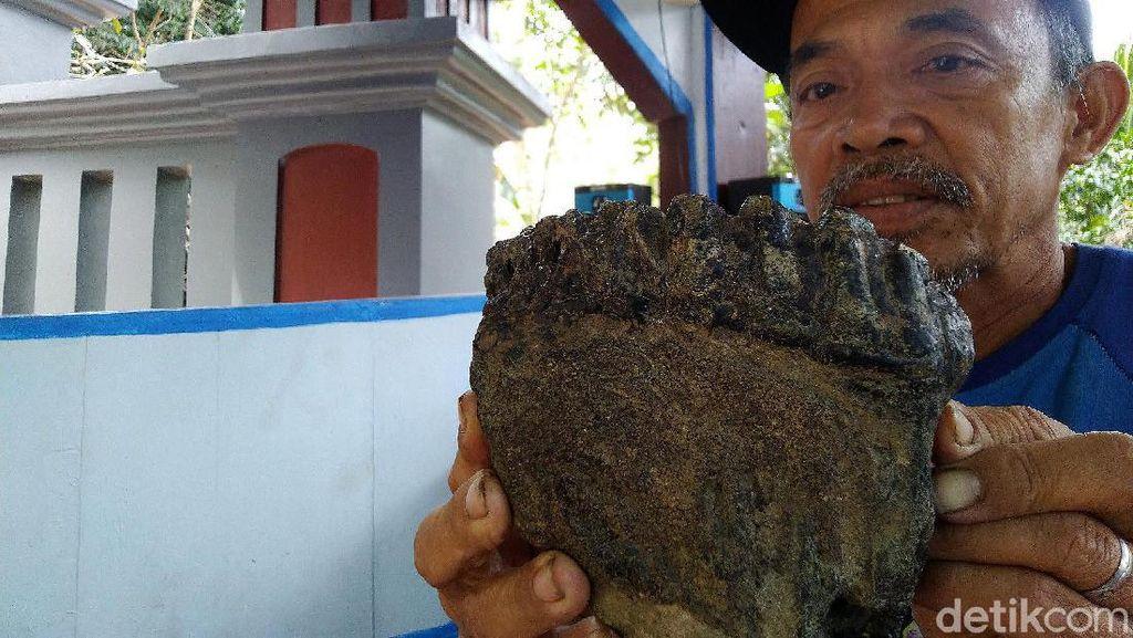 Unyil Mimpi Ketemu Jokowi Sebelum Temukan Rahang Gajah Purba