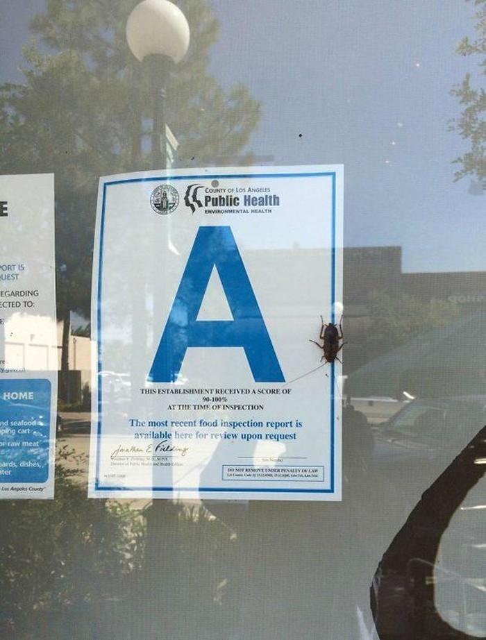 Dapat peringkat A untuk kebersihan restoran, sayangnya pengunjung malah temukan kecoak yang tengah merayap di dalam kaca restoran tersebut. Foto: Istimewa