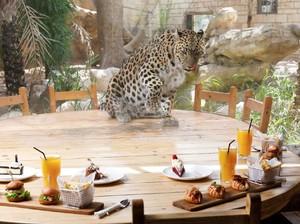 Asyik! Di Kebun Binatang Ini Bisa Makan Ditemani Macan Tutul dan Jerapah