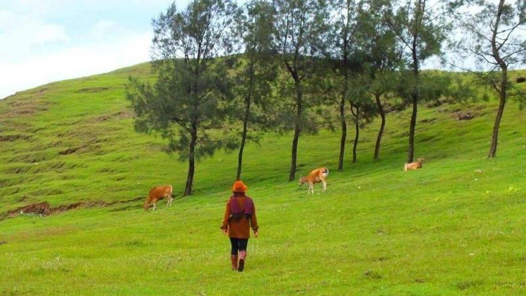 Siapa Sangka, Pemandangan Seindah Ini Ada di Timor Tengah Selatan